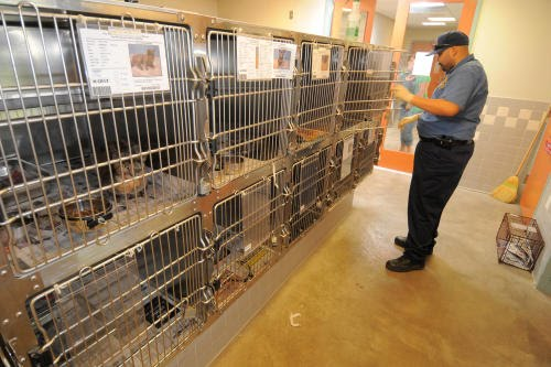 animal shelter solutions Now available ark7 is a major upgrade to ark software featuring many new enhancements and features ark shelter software is the premier windows software solution for managing information in your animal shelter, humane society, or animal control agency.