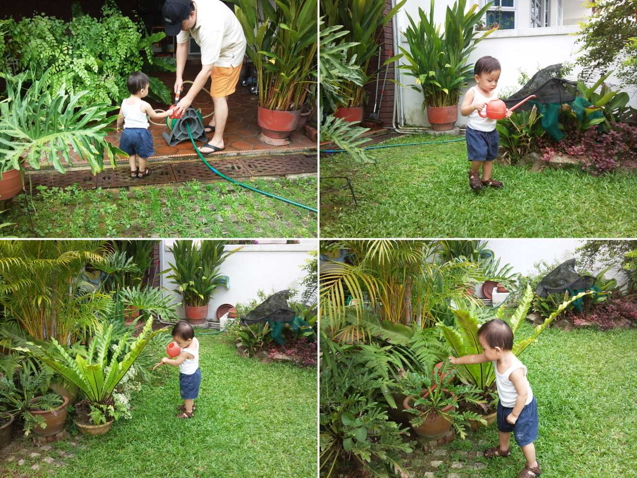 To use the watering can to water the plants just like what daddy do