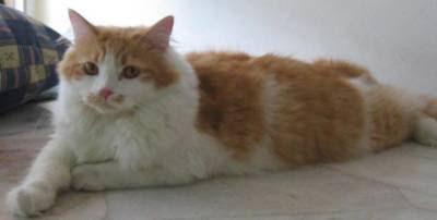 Kucing Dan Islam