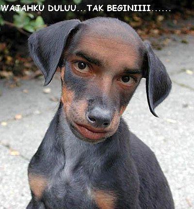 Lucu gawe guyu: anjing jual tampang