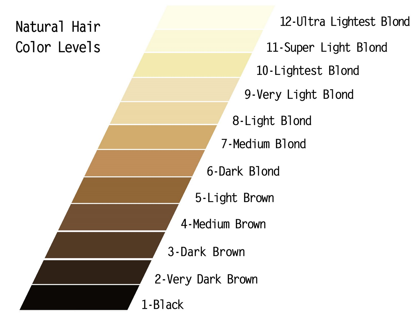 Level 6 Haircolor Photos  Dark Brown Hairs