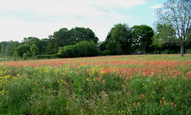 Field of Wild Flowers Last Spring
