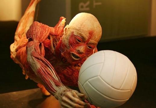 !!! Corpo Humano !!!