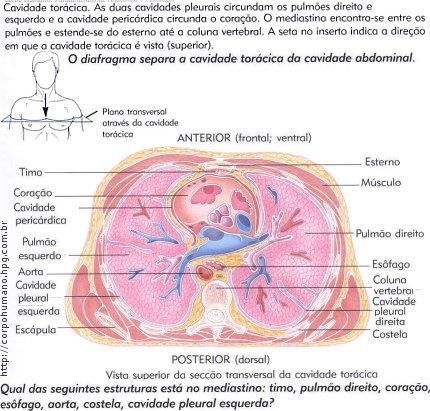 Figura 06 - Cavidade Torácica (Anterior e Posterior)