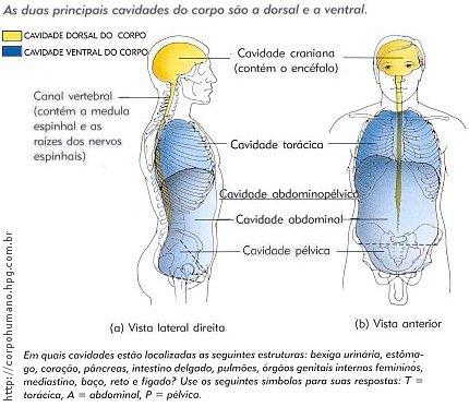 Figura 05 - Cavidade Dorsal e Ventral