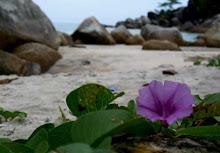 Bunga di Tanjung Kelayang Bangka