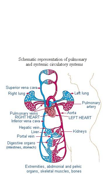 nursing case studies: Sepsis Neonatorum