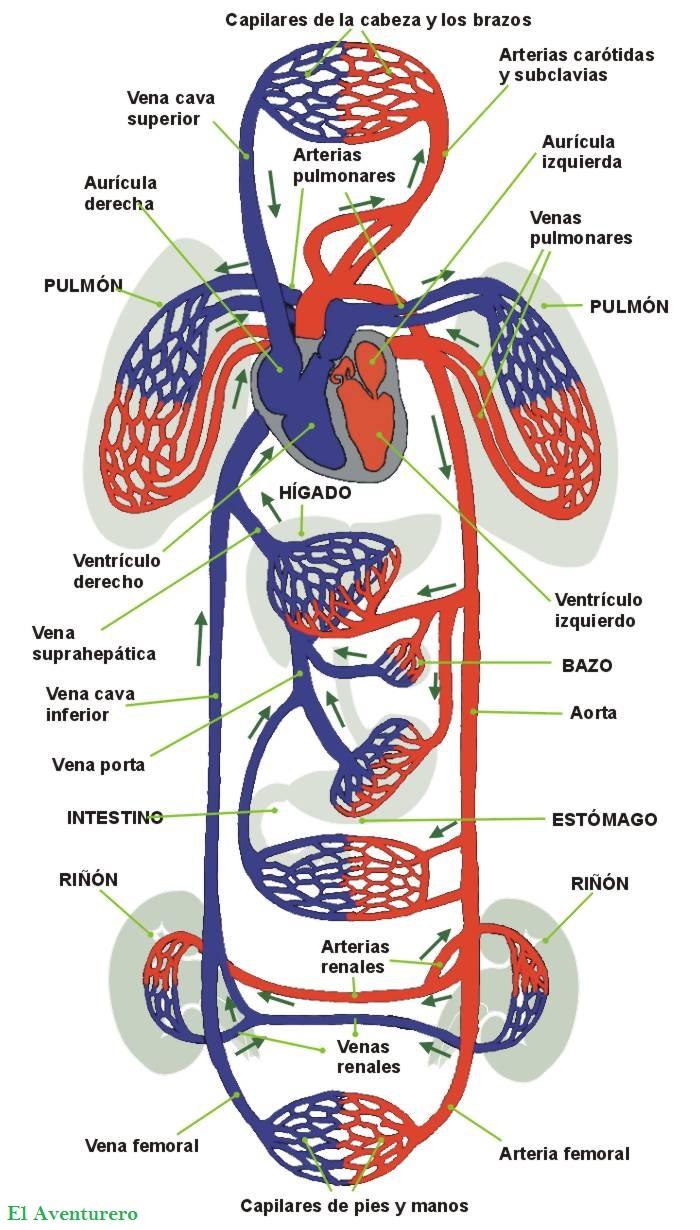 Medicina Genetica