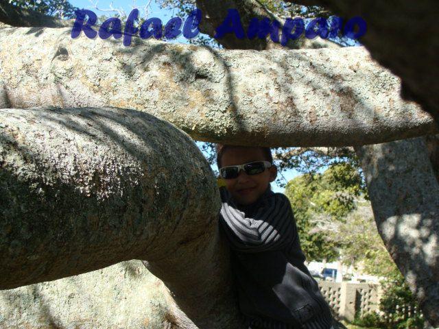 Rafael Amparo
