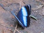Uma borboleta em Congonhal