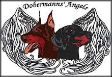 Dobermanns Angel