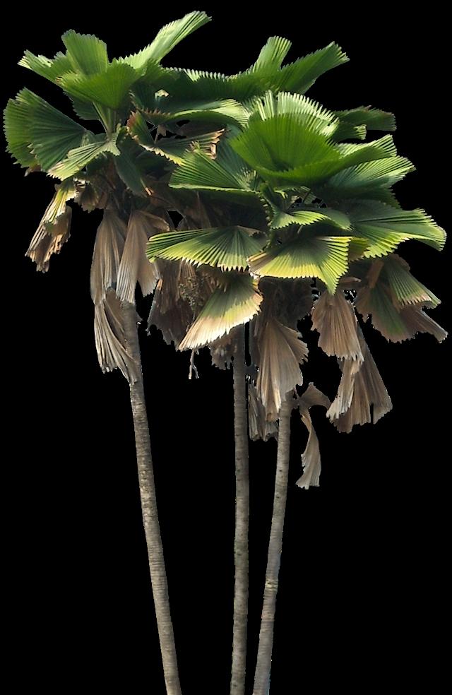 1000 images about photoshop trees plants on pinterest. Black Bedroom Furniture Sets. Home Design Ideas