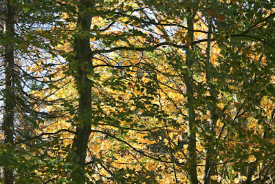 light in autumn trees