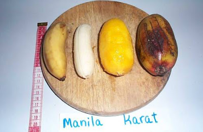 Karat and Manila bananas