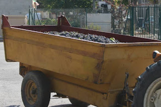 trailer full of black grapes