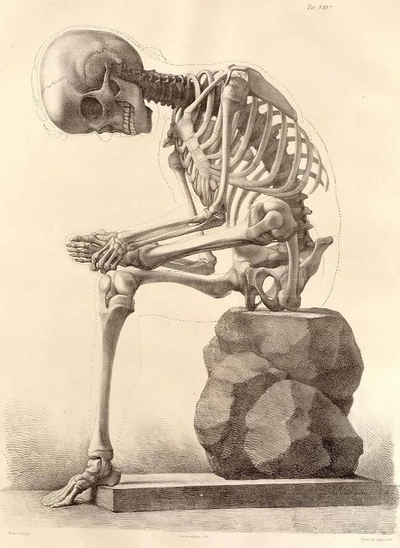 Human Anatomy Skeleton Art