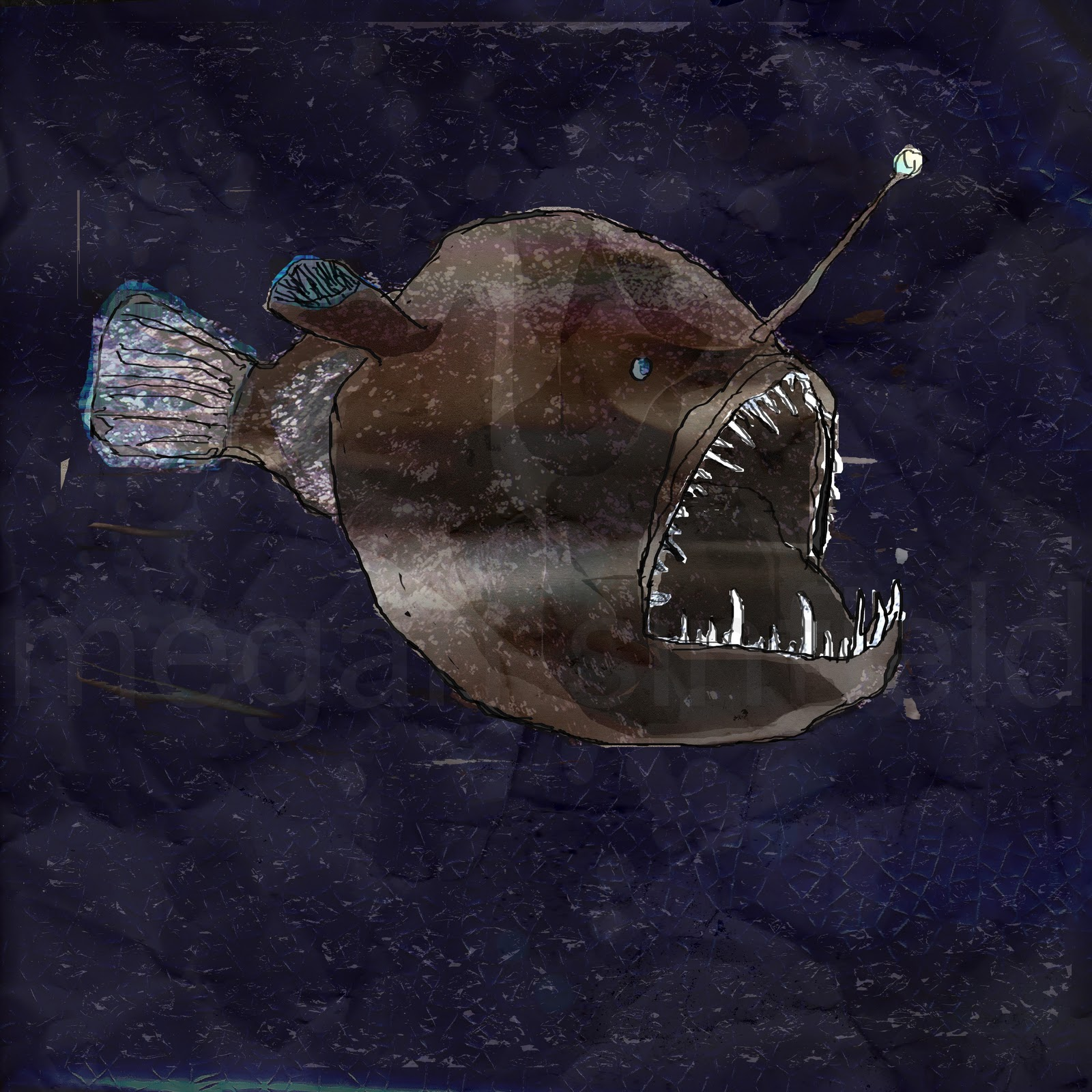 Megan sinfield angler fish 2010 for What is an angler fish