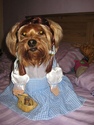 dog Dorothy