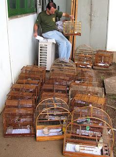 Ibama apreende 61 pássaros silvestres criados irregularmente em ...