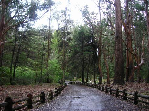 Zona norte paisajes zona norte de chile for Poda de arboles zona sur