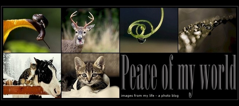 Peace of my world