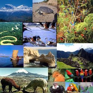 Estos recursos naturales representan, además, fuentes de riqueza para la explotación económica. Por ejemplo, los minerales, el suelo, los animales y las plantas constituyen recursos naturales que los humanos pueden utilizar directamente como fuentes para esta explotación.