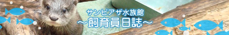 新札幌 「サンピアザ水族館」 - 飼育員日誌