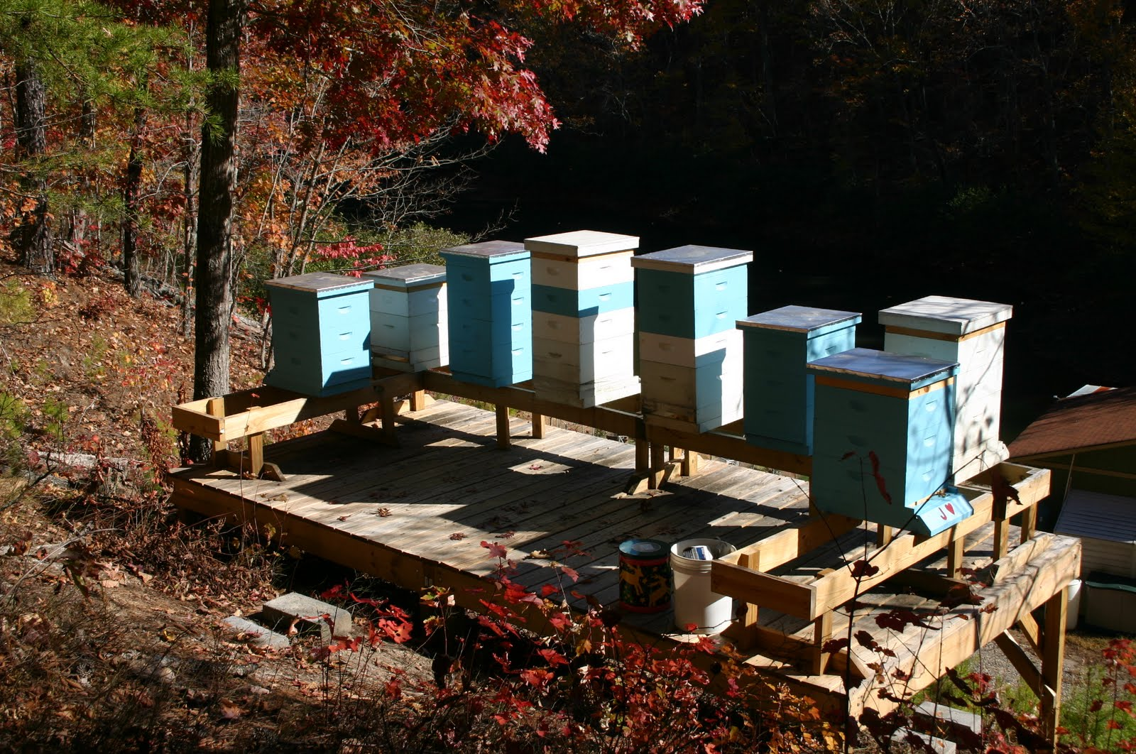 Steve&#39;s Apiary