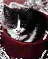El gato Alobar antes y de haber sido utilizado para la inserción de tubos y electrodos de forma permanente en su cerebro.