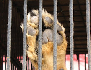Muchos perros abandonados por sus dueños son recogidos por refugios y quedan a la espera de adopción o acogida.