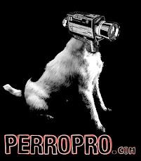 PerroPro
