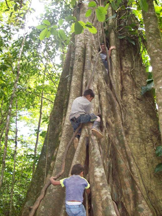 Parasite tree in Miraflor, Nicaragua