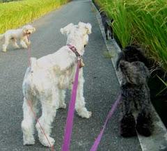 家族は犬3猫2