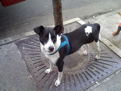 Cachorrinha à procura de um dono