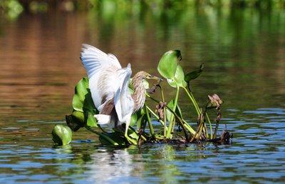 La Cambogia è ricca di parchi naturali