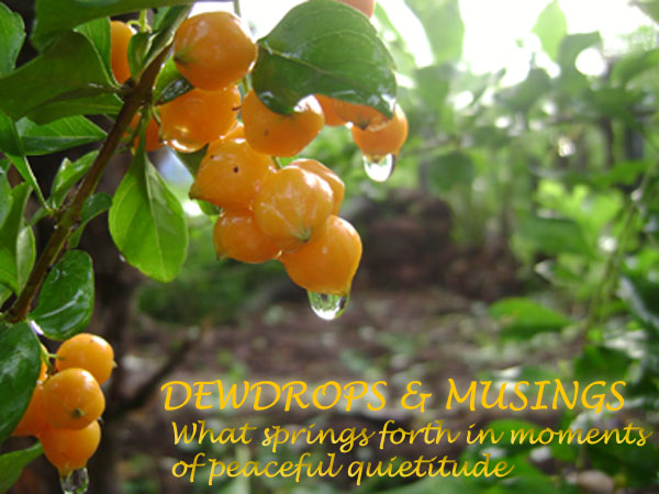 Dewdrops and Musings