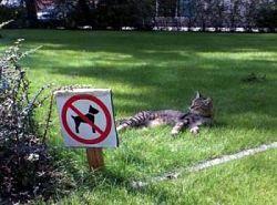 poza poze cu pisici pisica