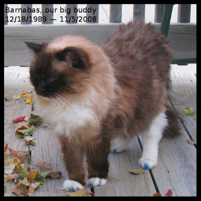 Barnabas, our big buddy. 12/18/1989-11/5/2008