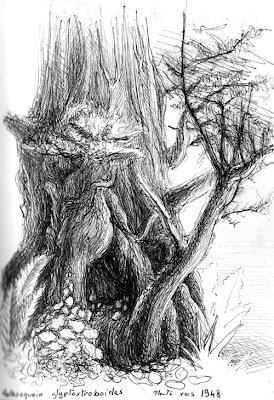Séquoïa de Chine, Metasequoia glyptostroboides, planté vers 1948