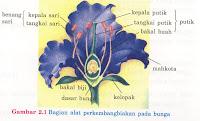 Perhatikan gambar bagian-bagian bunga di bawah ini :