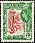 Arapaima on stamp