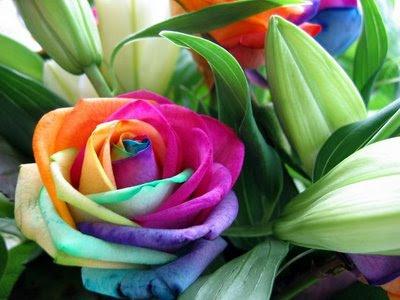http://4.bp.blogspot.com/_VUSyp_bIIVY/SY637g4pTRI/AAAAAAAAEXA/3TZ78wX85rQ/s400/flor_rara.jpg