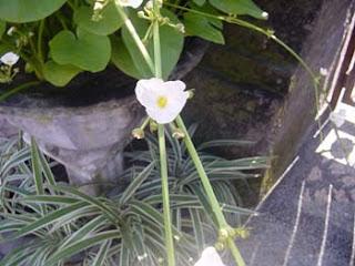 Bali flower, unknow flower image, nice flower