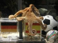 Prediksi gurita octopus paul image