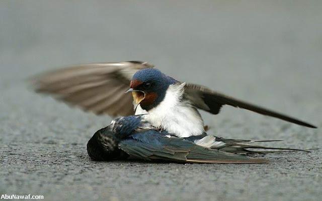 love_birds4.jpg