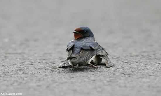 love_birds5.jpg