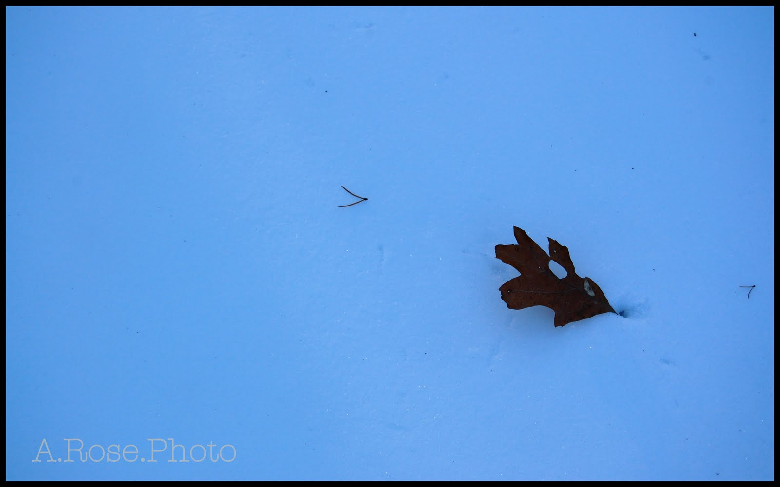 [leaf+in+snow]