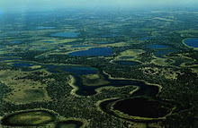 O Pantanal Matogrossense