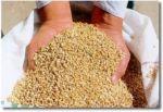 Las-semillas-más-preciadas