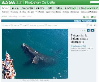 Patagonia, le balene danno spettacolo Italia Promociona Penisola Valdés